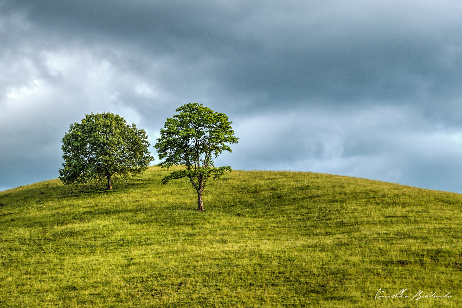 kanishka_biddanda-02-tree_farm-dsc-9149-51-edited2-