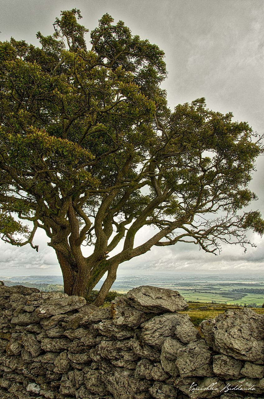 kanishka_biddanda-04-DSC_3637-england_countryside_tree-color